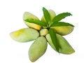 Free Mangoes Royalty Free Stock Images - 31183149