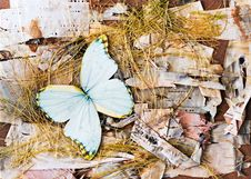 Abstract Composition From Butterflies, Birch Bark And Straw. Royalty Free Stock Photos
