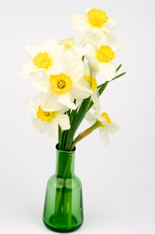 Free Daffodils Bunch Royalty Free Stock Photo - 31187525