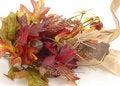 Free Autumn Leaves Stock Image - 3125591