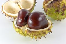 Free Chestnuts On Background Stock Images - 3120104