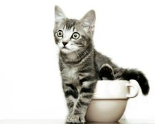 Free Kitten In A Bowl Stock Photo - 3121620