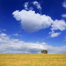 Free Lonely Tree Stock Photography - 3123112