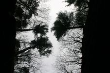 Free Looking Up At Trees Stock Images - 3124804