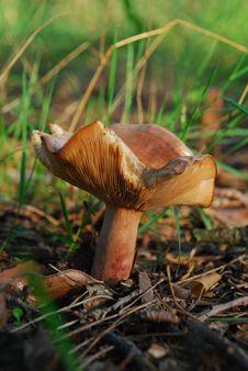 Free Mushroom Stock Images - 3129034