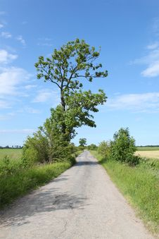Lonely Road And A Tree Royalty Free Stock Image