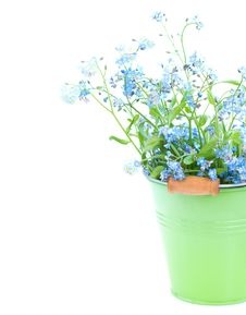Free Bunch Of Forget-me-nots Flowers Royalty Free Stock Image - 31210326