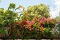 Free Beauatiful Classical Mediterranean Garden Royalty Free Stock Image - 31226976