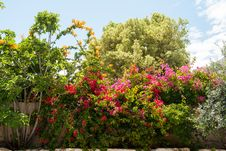 Beauatiful Classical Mediterranean Garden Royalty Free Stock Image