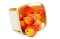 Free Nectarines Royalty Free Stock Photography - 31233347