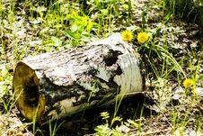 Free Birch Log With A Cavity Inside. Stock Photos - 31234883