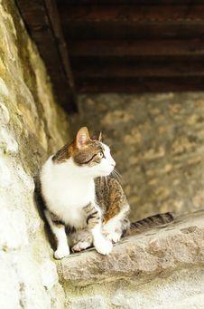 Free Cat Stock Photography - 31235852