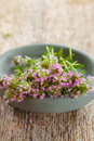 Free Thyme Royalty Free Stock Image - 31243266