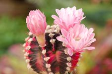 Free Cactus And Flower Stock Photos - 31242253