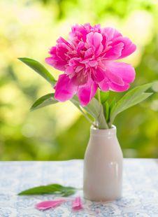 Free Pink Peony Stock Photo - 31242900