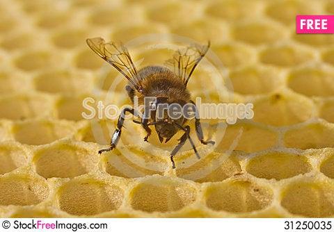 Free Bee Build Honeycombs Royalty Free Stock Photo - 31250035
