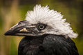 Free Hornbill Royalty Free Stock Images - 31260859