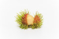 Free Tropical Fruit Rambutan Stock Photography - 31268972