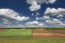 Rural Landscape With Wheat Field On A Sunny Day. Royalty Free Stock Image