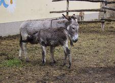Free Donkey Stock Photos - 31266863
