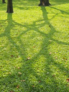 Shadow On Lawn Royalty Free Stock Image