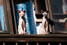 Free Sphynx Cats Are Sunbathe On The Window Royalty Free Stock Photography - 31273857