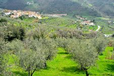Free Tuscany, Landscape With Olive Trees Stock Photography - 31274702