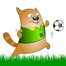 Free Cat With Soccer Ball Royalty Free Stock Photo - 31274855