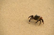 Free A Crab Crawling Away Stock Photo - 31281570