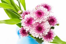 Free Pink Flowers Royalty Free Stock Photos - 31285578