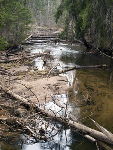 Free River In Deep Forest Royalty Free Stock Photo - 31285645