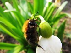 Free Bee Stock Photo - 31286590