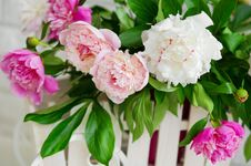 Free Beautiful Peonies Closeup Royalty Free Stock Images - 31289669