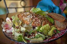 Free Chicken Salad Stock Photo - 31295630