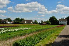 Free Dutch Countryside Stock Photos - 31296273