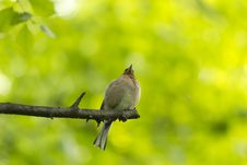Free Bird On A Branch Stock Image - 31297491