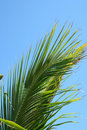 Free Palm Frond Royalty Free Stock Image - 3135336