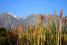 Mountain And Cattails Royalty Free Stock Photography