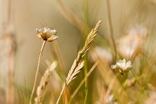 Free In The Cornfield Stock Images - 3132714
