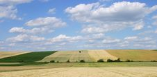 Free Grain Fields With Single Tree Stock Photography - 3132842