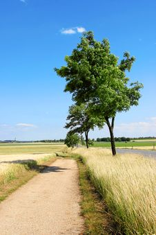 Free Trees Along Road Stock Images - 3132874
