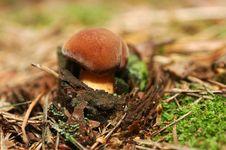 Free Mushroom Stock Images - 3133254