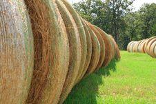 Free Rows Of Hay Stock Photo - 3133410
