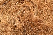 Free Detailed View Of Hay Stock Images - 3133924