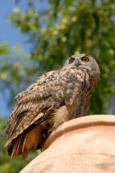 Free Owl On The Jug Stock Photo - 3134060