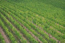 Free Vineyards Stock Photography - 3135552