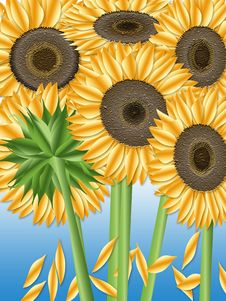Free Sunflowers Stock Photography - 3136712