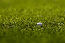 Free Golf Ball On Fairway Royalty Free Stock Photos - 3137278