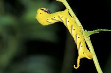 Caterpiller Yellow Color Stock Images
