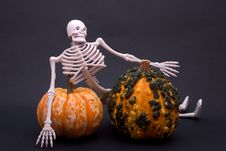 Free Skeleton And Gourds Stock Images - 3138564
